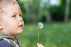 A child plays outdoors with dandelion. Baby boy playing outdoors with dandelion, happy, holiday stock image