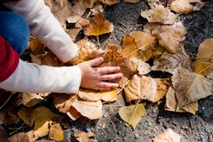 Child plying with leaves Royalty Free Stock Image