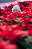 Child with poinsettias. Little girl with white cap between poinsettias stock images
