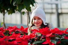 Child with poinsettias Stock Images