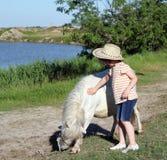 Child and pony horse. Child cowboy and pony horse Stock Photo