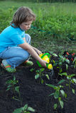 Child pours fresh sprouts from the watering can in the summer ga Royalty Free Stock Image