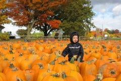 Child in a pumpkin patch Stock Photo