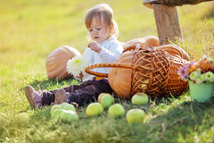Child with pumpkins Stock Image