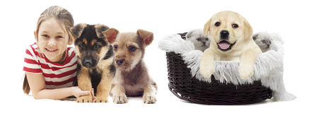 Child and puppies Stock Images