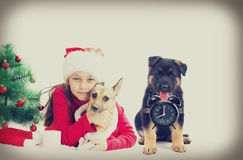 Child and puppy Christmas Stock Photos