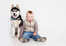 Child with puppy husky Stock Image