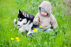 Child with puppy husky Stock Photos