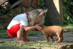 Child and puppy pet Stock Image
