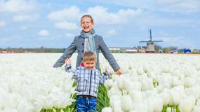 Child in the purple tulips field Royalty Free Stock Photos