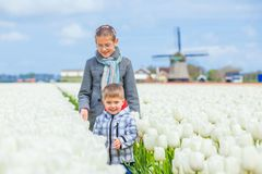 Child in the purple tulips field Stock Images