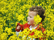 Child in Rapeseed. Boy in a field of rapeseed Stock Photography