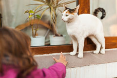 Child reaching to catch cat Stock Photo