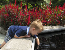 Child reaching in the water at the Gardens. Child reaching his arm into the water at the Botanical Gardens Royalty Free Stock Photography