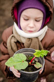 Child with rhubarb Stock Image