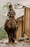 Child riding a buffalo Stock Images