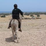 Child riding a donkey stock photography
