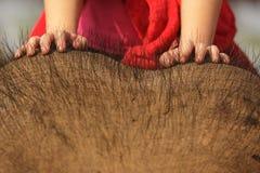 Child riding elephant. Child on asian elephant head, focus on hands Stock Photos