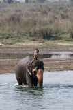 A child riding on elephant. Cross the Rapit river , Chitwan National Park, Nepal, Asia Royalty Free Stock Photography