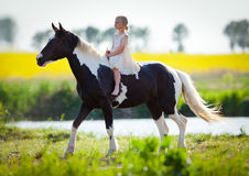 Child riding horse in the meadow. Child riding a big horse in sunset in the meadow Stock Image