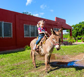Child riding a miniature donkey Stock Photos