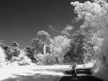 Child Riding in Park. Little boy riding bike through a city park infrared black and white Royalty Free Stock Image