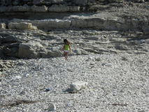 Child on the rocks Stock Photography