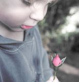 Child with rose bud Royalty Free Stock Images