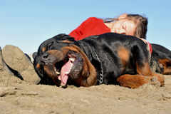 Child and rottweiler Stock Photo