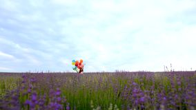 A child runs across the field of lavender with stock video footage