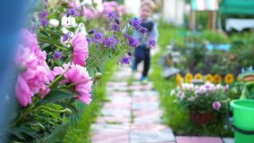 Children run along the path along the flowers. Two boys play in the flower garden. Happy childhood. The child runs along the path along the flowers. Boy playing stock video