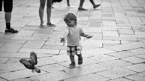 Child runs after the pigeon. Baby boy feeding pigeon. Child runs after the pigeon. Photo closeup of cute fair-haired blond kid tiny little child baby boy feeding royalty free stock photos