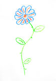 Child's drawing. Of the flower on white Stock Image