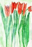 Child's Drawing of Red Tulip Flowers, Watercolor stock photos