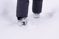 Child`s feet in the snow shoe walking on a track in a snowstorm Royalty Free Stock Image