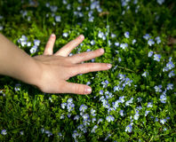 Child's hand collects flowers Stock Image