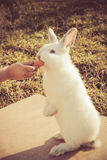 Child's hand feeding a little rabbit Stock Image