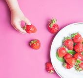 Child`s hand holding strawberry on pink background, plate of strawberries. healthy eating concept. Top view, flat lay Stock Photography