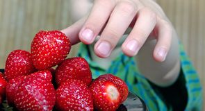 Child`s hand holding strawberry. Summer healthy eating concept. Close-up royalty free stock photography