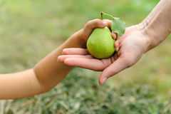 Child's hand with pear Royalty Free Stock Photography