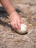 Child's hand picking egg on the ground Stock Photography