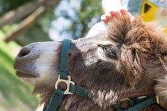 Child`s hand strokes the donkey, close-up royalty free stock photo