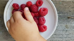 Child`s hand taking some fresh juicy raspberries. From small white plate. Vibrant red raspberry closeup. Summer berry harvest time. Healthy organic fruits for royalty free stock photos