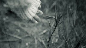 Child's hand touches grass Royalty Free Stock Photography