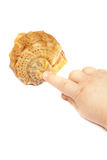 Child's hand touches a seashell Royalty Free Stock Photography