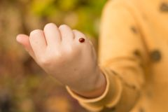 On the child`s handle creeps red, speckled in white, ladybug, wants to take off royalty free stock images