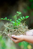 Child's Hands Holding Fresh Small Plant Royalty Free Stock Image