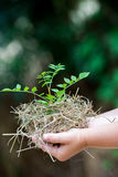 Child's Hands Holding Fresh Small Plant Stock Photos