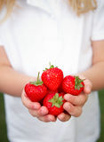 Child's Hands Holding Ripe Strawberries Royalty Free Stock Image
