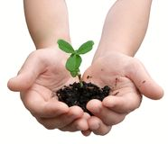 Child's hands holding a small plant Stock Image